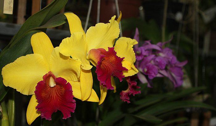 Exposição colore com orquídeas o Turcão I