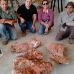 Fóssil depositado no museu para posterior preparação e estudo cientifico.