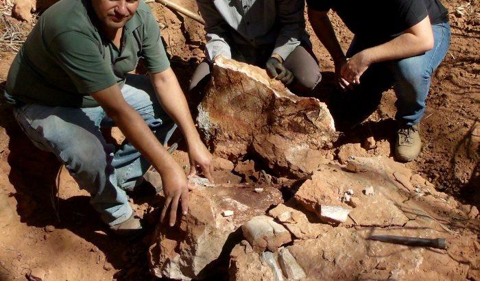 Ciclista encontra fóssil durante trilha pela área rural