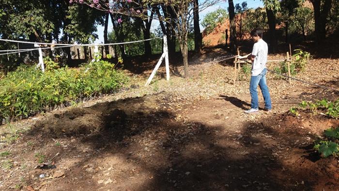 Em Monte Alto, resíduos de roçagem retornam ao meio ambiente em forma de adubo orgânico