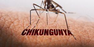 Monte Alto confirma caso de chikungunya