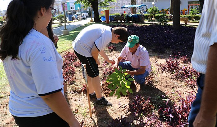 Em memória das vítimas de acidentes de trânsito, Monte Alto realiza plantio de árvore