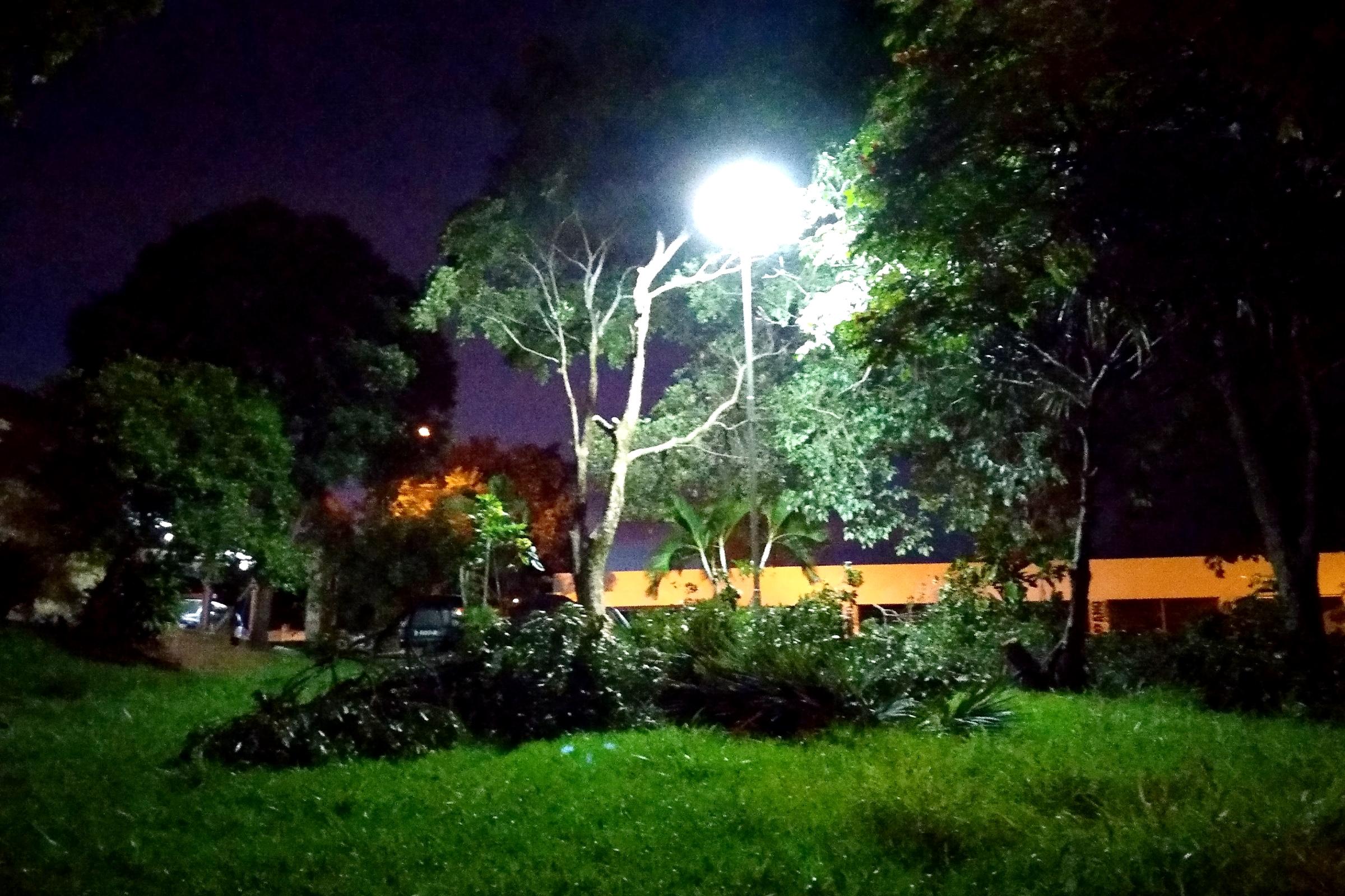 Próximo ao Terminal Rodoviário, uma das árvores obstruía a luz do poste e foi podada.