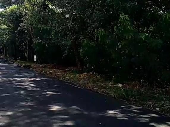 Área de preservação continua recebendo atenção do Poder Executivo